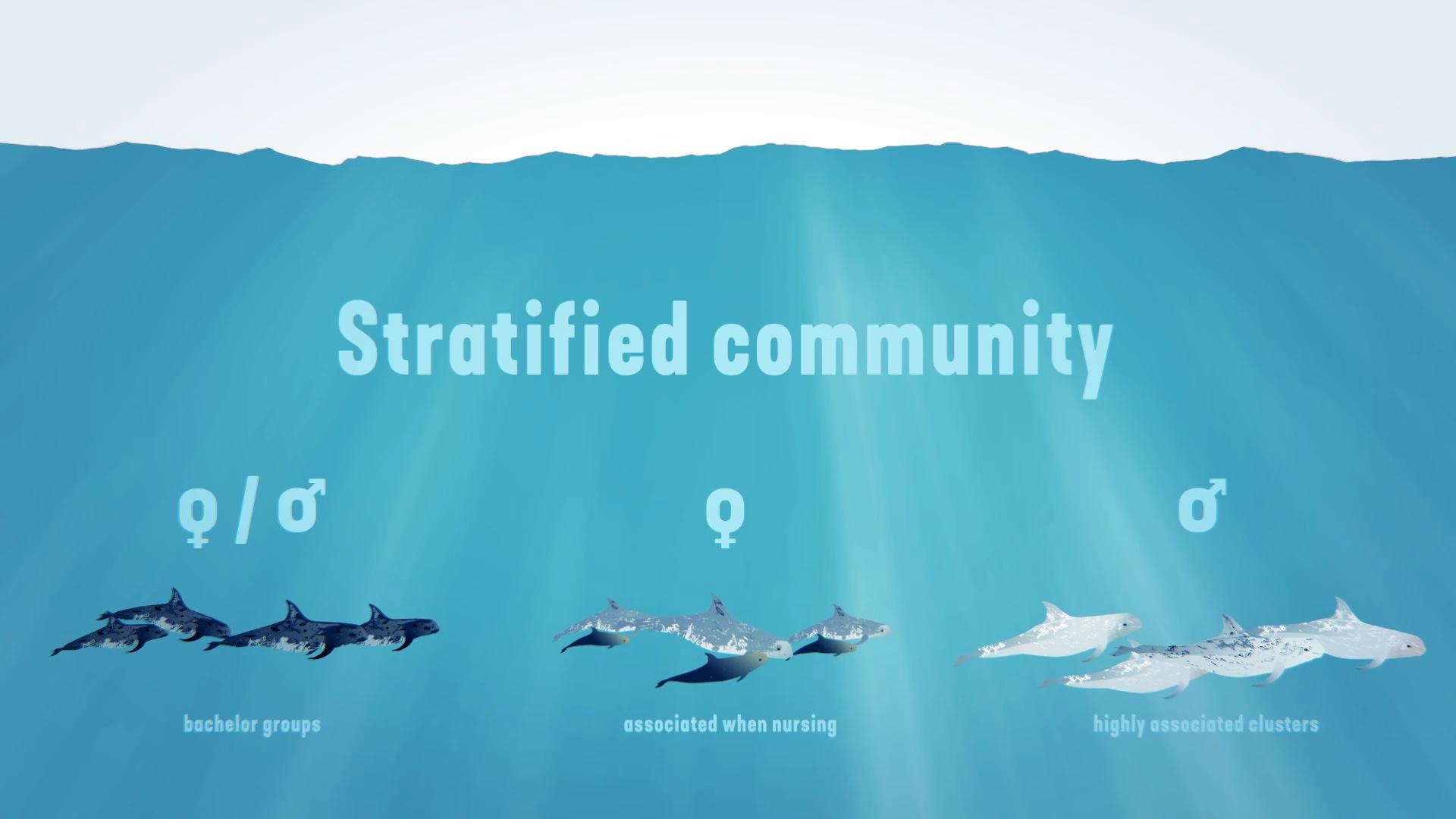 Stratified communtity